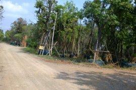 ขายที่ดิน ใน รังสิต, ธัญบุรี
