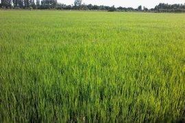 ขายที่ดิน ใน ท่าม่วง, กาญจนบุรี