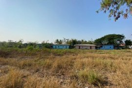 Land for Sale or Rent in Pa Daet, Chiang Mai