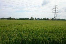 ขายที่ดิน ใน เพชรบุรี
