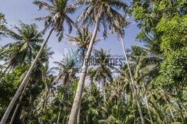 ที่ดิน สำหรับขาย ใน เกาะพะงัน, สุราษฎร์ธานี