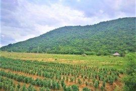 ที่ดิน สำหรับขาย ใน ปราณบุรี, ประจวบคีรีขันธ์